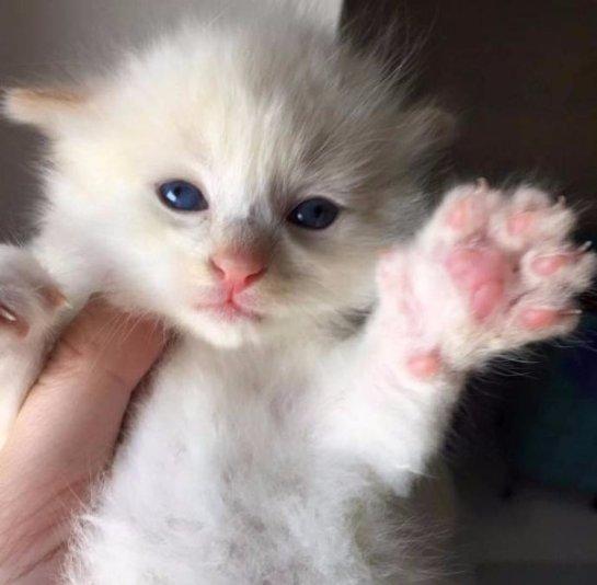 В Род-Айленде спасли крошечного котенка, застрявшего между камней