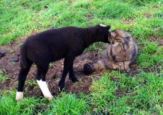 Необычный помощник на ферме