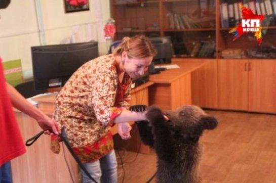 На улице Читы нашли маленького медвежонка
