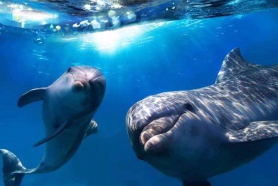 В Индии дельфинов признали личностями