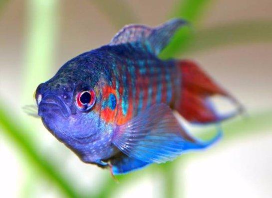 Рыбы оказались намного умнее, чем считалось ранее