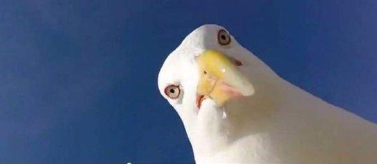 Морская чайка отобрала камеру у туриста и засняла видео