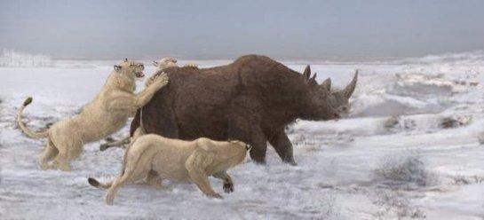 В Якутии нашли останки пещерных львят