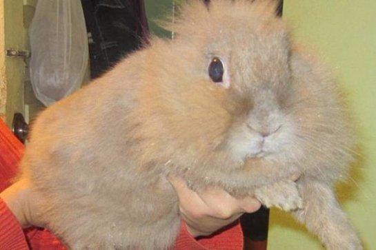 Кролик предупредил семью об опасности
