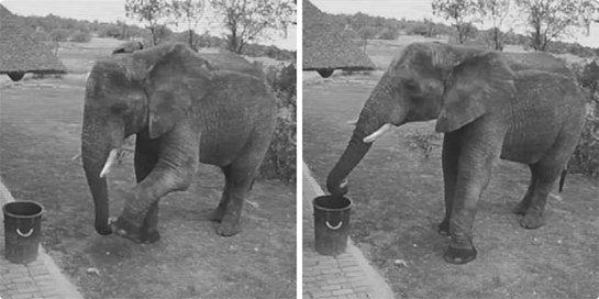 В Африке слон убирает мусор
