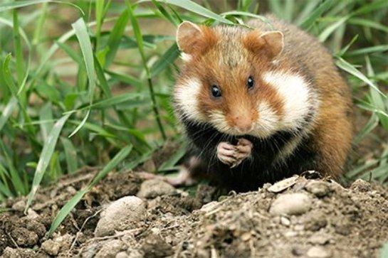 В Белгородской области запретили охоту на некоторых животных
