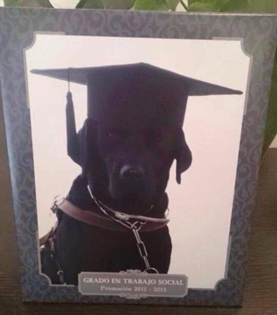 В Испании лабрадор «окончил» университет