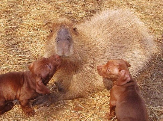 У щенят появилась необычная мама