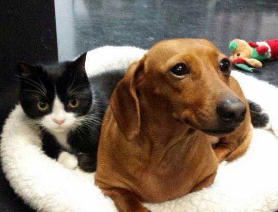 Необычная дружба собаки с кошкой