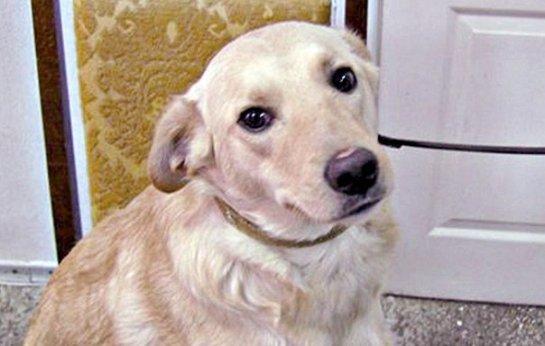 В Белоруссии появилась первая в мире собака- миллионер
