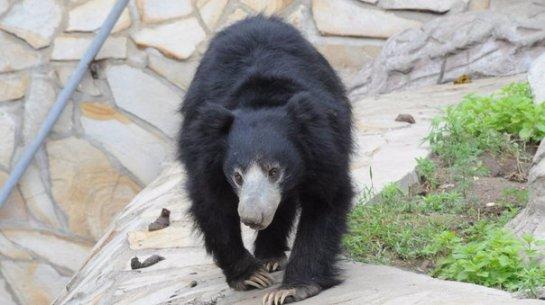 В Московском зоопарке медведи манипулируют людьми