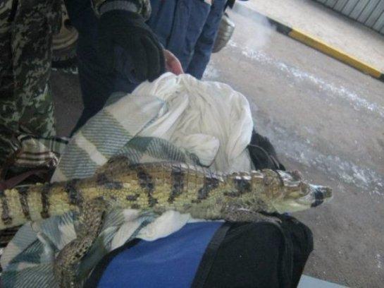 Украинские таможенники спасли крокодила