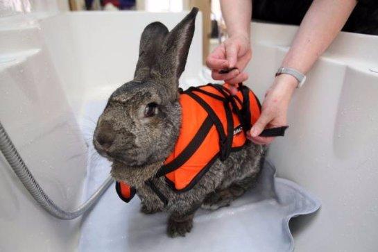 Как кролику лечат  артрит