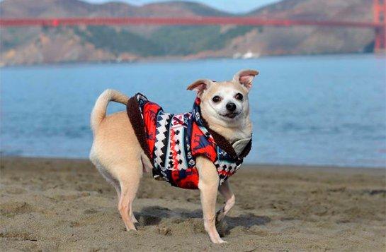 Собака стала мэром Сан-Франциско