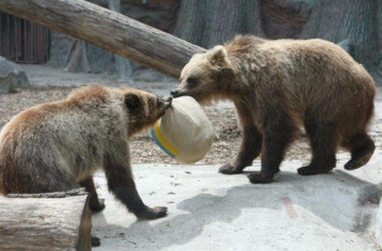 В столичном зоопарке родились медвежата