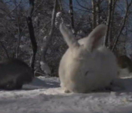 Кролики заселили остров средь Ангары
