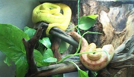 Житель Воронежа живёт дома с 50 змеями