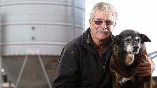 В Австралии собака побила рекорд по долгожительству