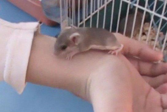 В Нижнем Новгороде мышке вправляли лапку