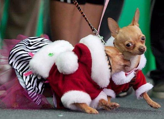 Собачий карнавал в Перу