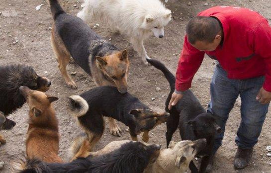 Китайский бизнесмен потратил все деньги на приют для собак