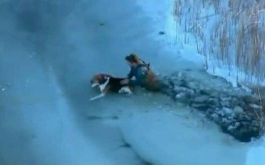 Спасатели вытащили из полыньи собаку