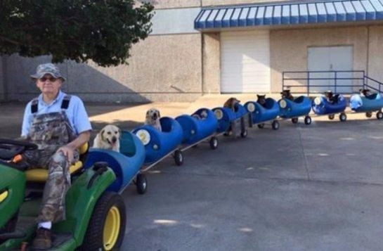 Пенсионер из США построил поезд для бездомных собак