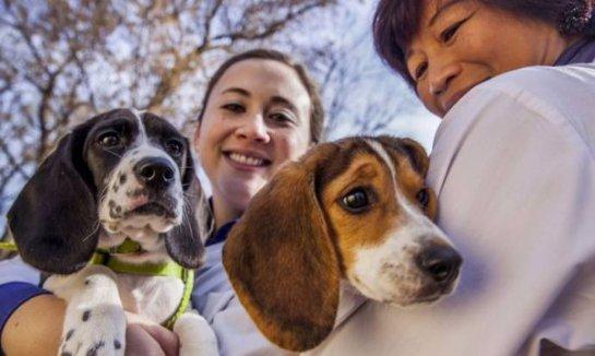 В США родились щенки, зачатые при помощи экстракорпорального оплодотворения