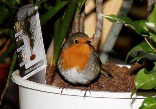 Птичка выпрашивает еду у посетителей зоомагазина