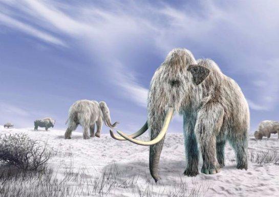 Мамонты могут снова появиться на Земле