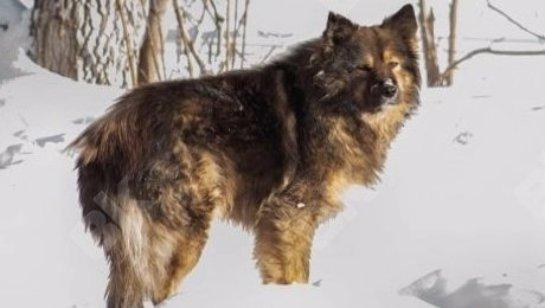 В Полтаве пёс спас умирающую в лесу девушку