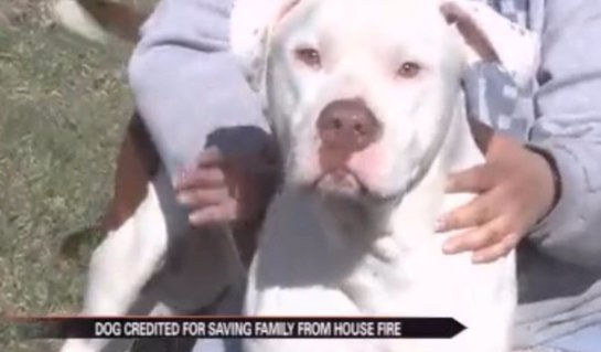 Бульдог предупредил семью о пожаре