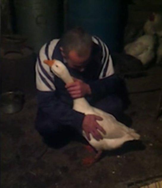 В Дагестане пожалели гуся