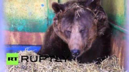 В зоопарке Уфы медведица родила пятерых детенышей