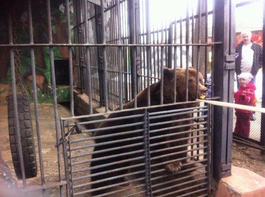 В пермском зоопарке медведям дали медовые булочки