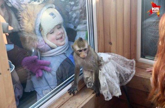 В зоопарке Барнаула состоялась обезьянья свадьба