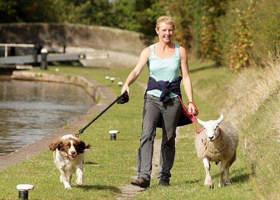 Овца с повадками собаки
