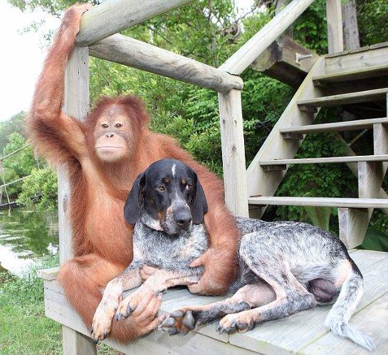 Обезьяна и пес подружились в приюте
