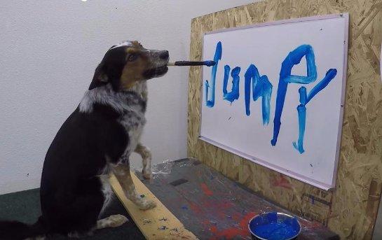Пёс, который умеет писать своё имя