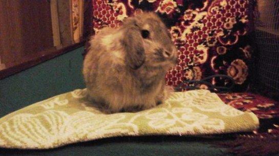 В Перовском парке поселился кролик
