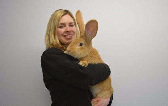 В Шотландии большому кролику ищут хозяев