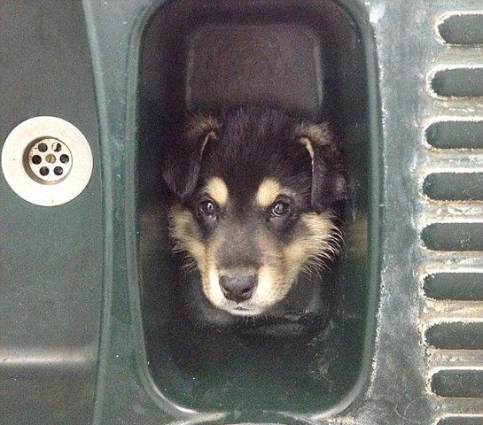 Спасение щенка из раковины