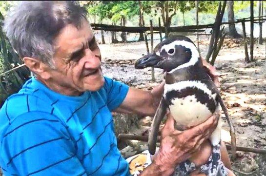 Пингвин проплыл более 20 тысяч километров ради встречи со своим спасителем