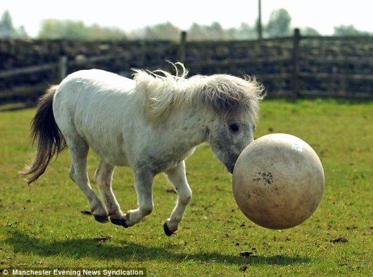 Пони Джеффри умеет играть в футбол