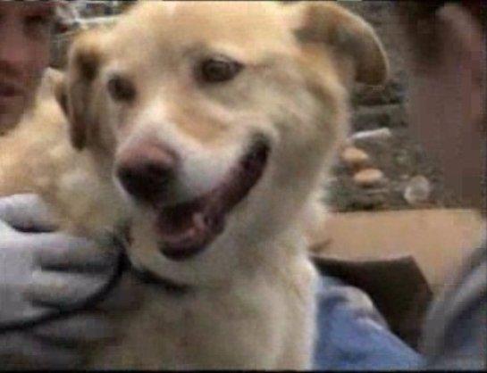 Собака спасла другую собаку из-под завалов