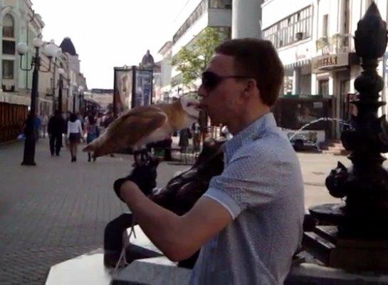 Целующаяся сова в Казани