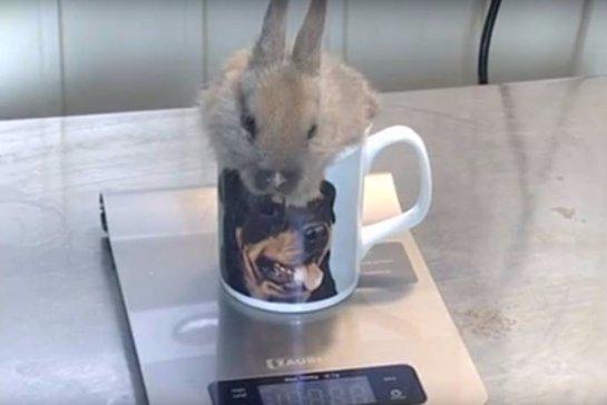 В Челябинске живет самый маленький на свете кролик