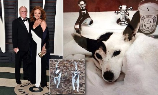 Американский миллиардер клонировал свою собаку