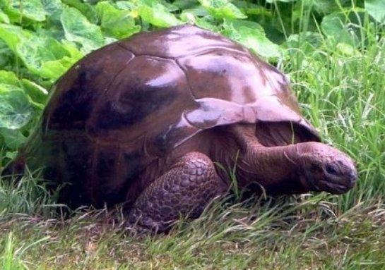 Самую старую черепаху в мире впервые искупали