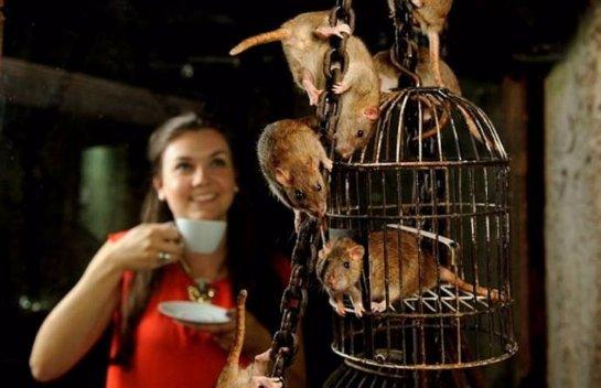 В Лондоне открылось кафе с крысами
